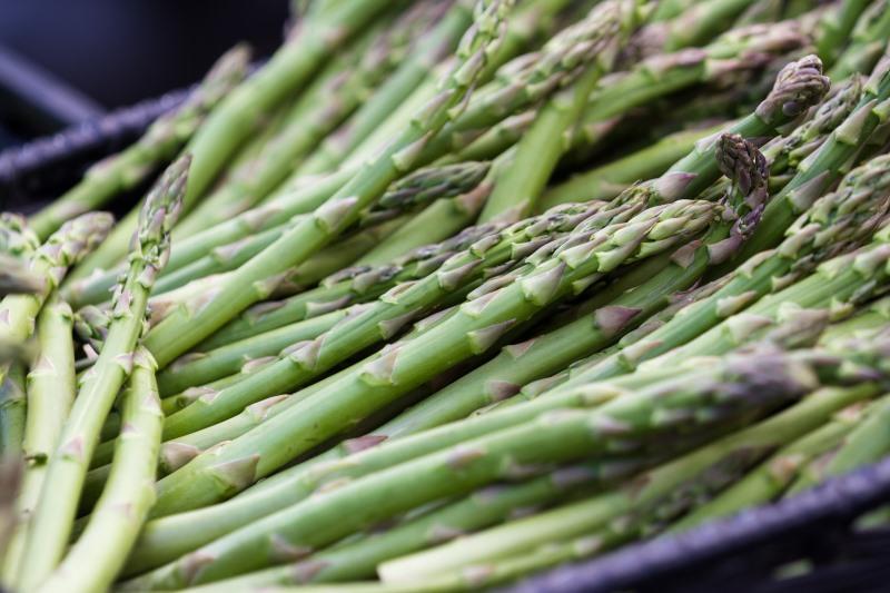 Asparagus and Epilepsy