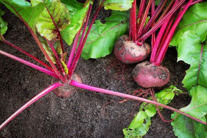 beets-and-bones-health