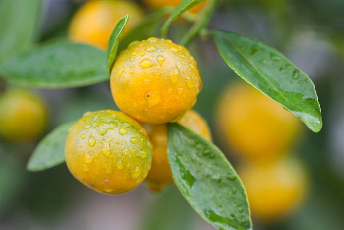 history-oranges