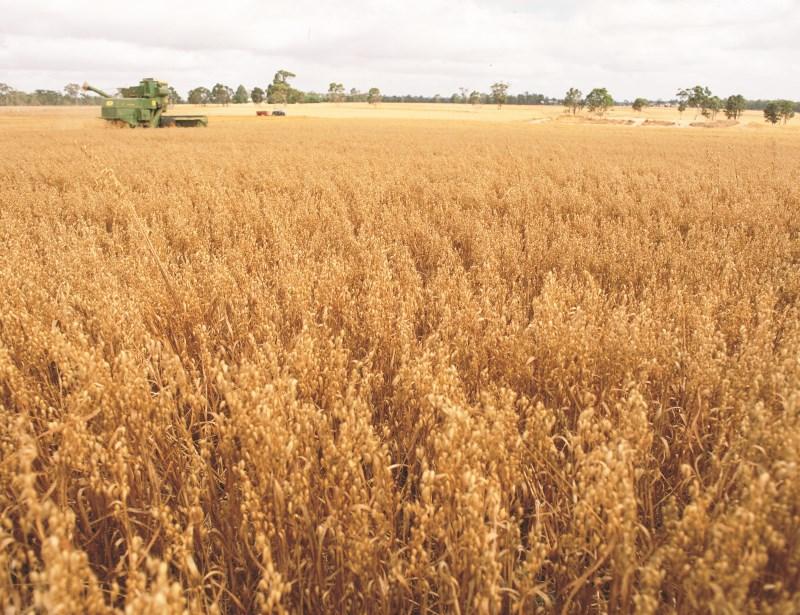 how-oats-grow
