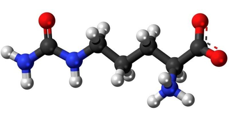 L-Citrulline-benefits