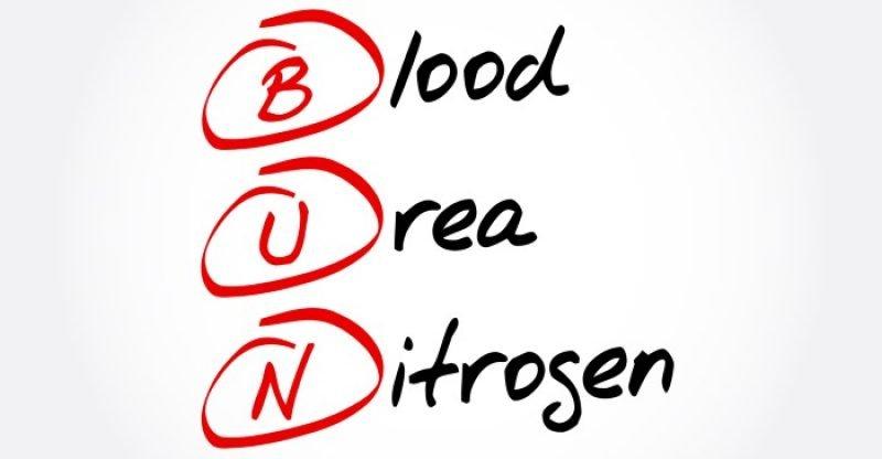 causes-of-low-or-high-blood-urea-nitrogen-bun