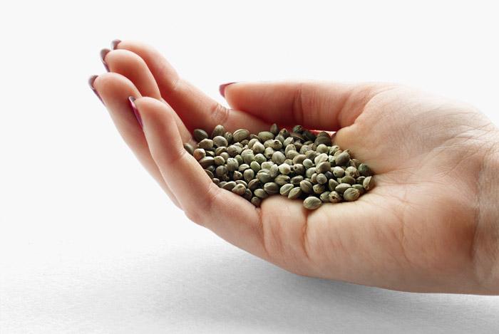 hemp-seeds-in-hand