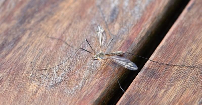 how to get rid of mosquitoes 800x416 - 20 MANIEREN OM VAN MUGGEN AF TE KOMEN HOE KOM IK VAN DIE MUGGEN AF?