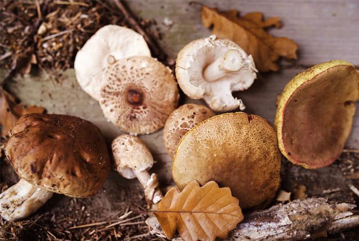mushrooms-superfood