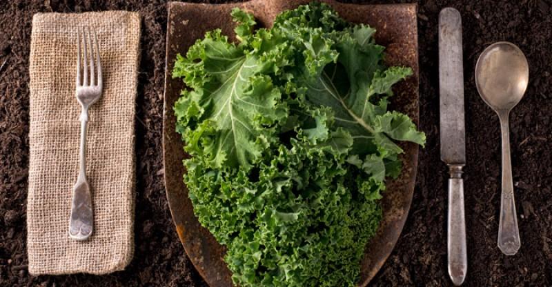 organic-kale-on-table